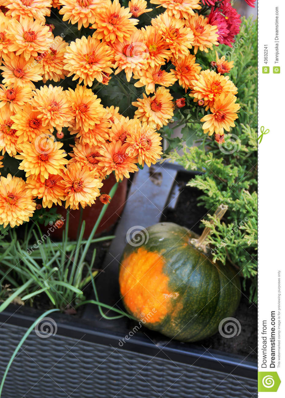 Mix Of Beautiful Fall Terrace Flowers Stock Image Image Of Outside