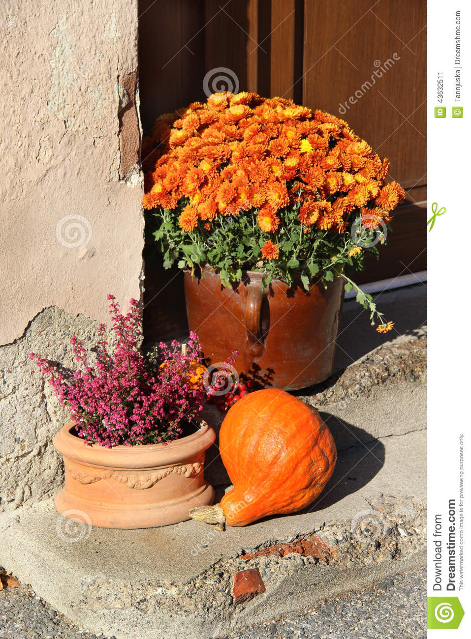 Mix of beautiful fall terrace flowers stock image image of terrace royalty free stock photo izmirmasajfo Image collections