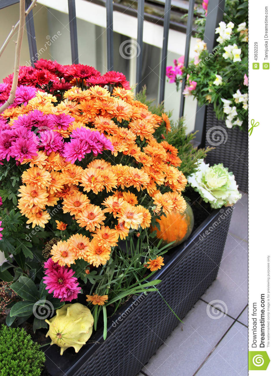 Mix of beautiful flowers in the fall terrace garden stock image mix of beautiful flowers in the fall terrace garden izmirmasajfo