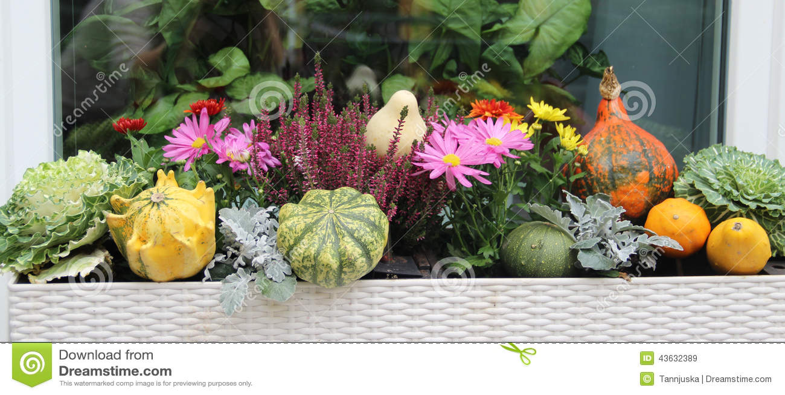 Mix Of Beautiful Vivid Terrace Fall Flowers And Pumpkin Stock Image