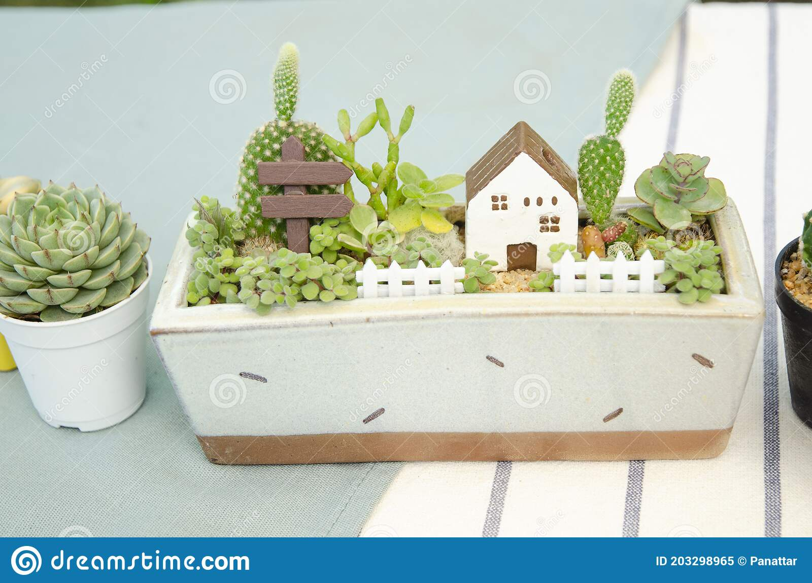Mix Of Cactus And Succulent Plant Arrangement With House Miniature Fairy Terrarium Stock Image Image Of Green Color 203298965