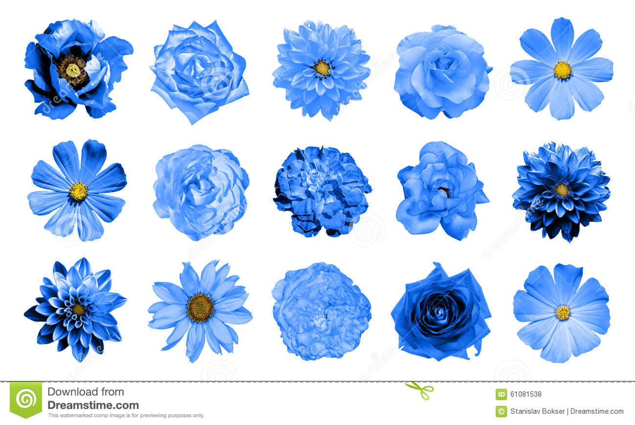 Mix Collage Of Natural And Surreal Blue Flowers 15 In 1