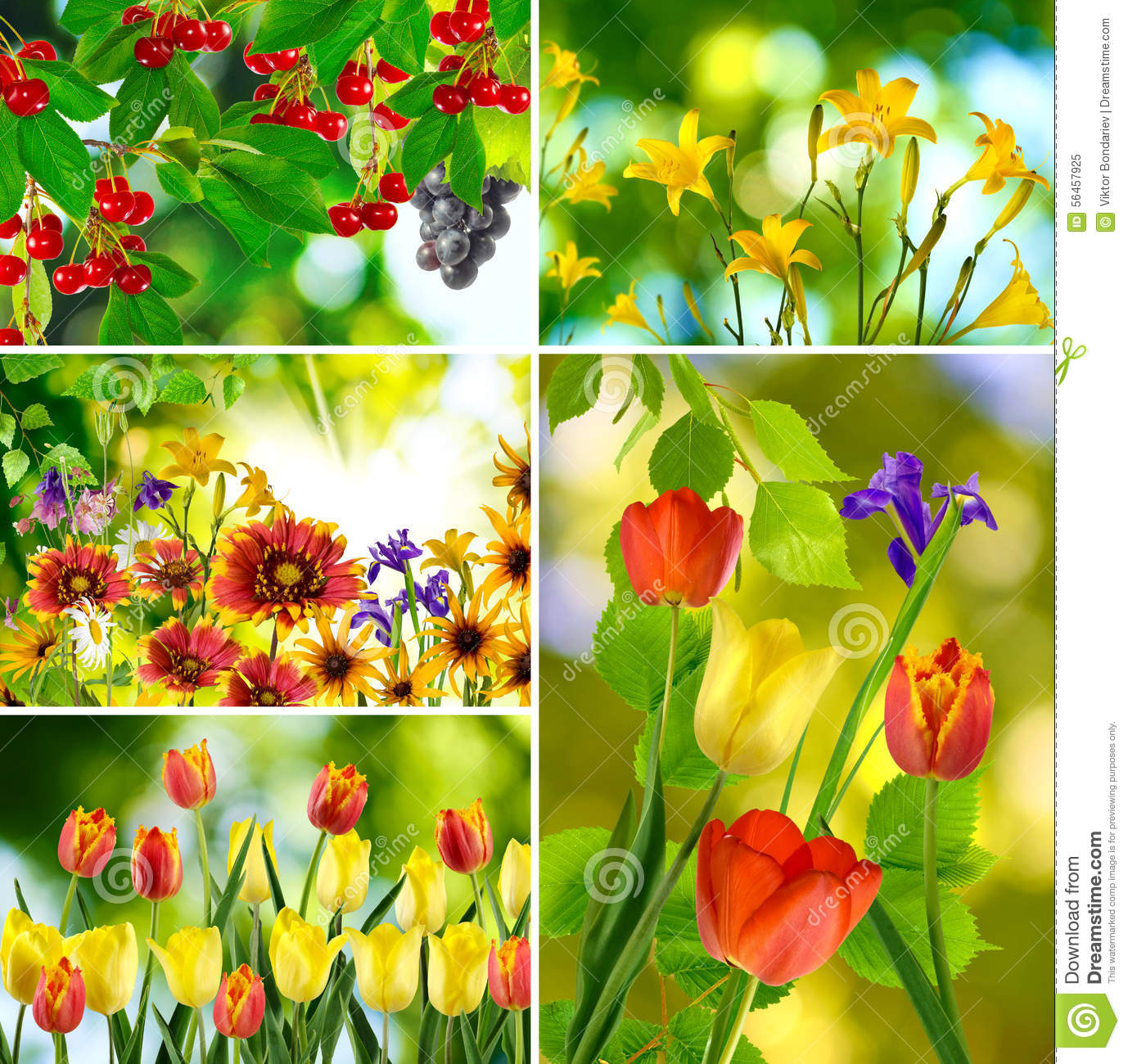 Mix of different beautiful flowers stock image image of colorful royalty free stock photo izmirmasajfo