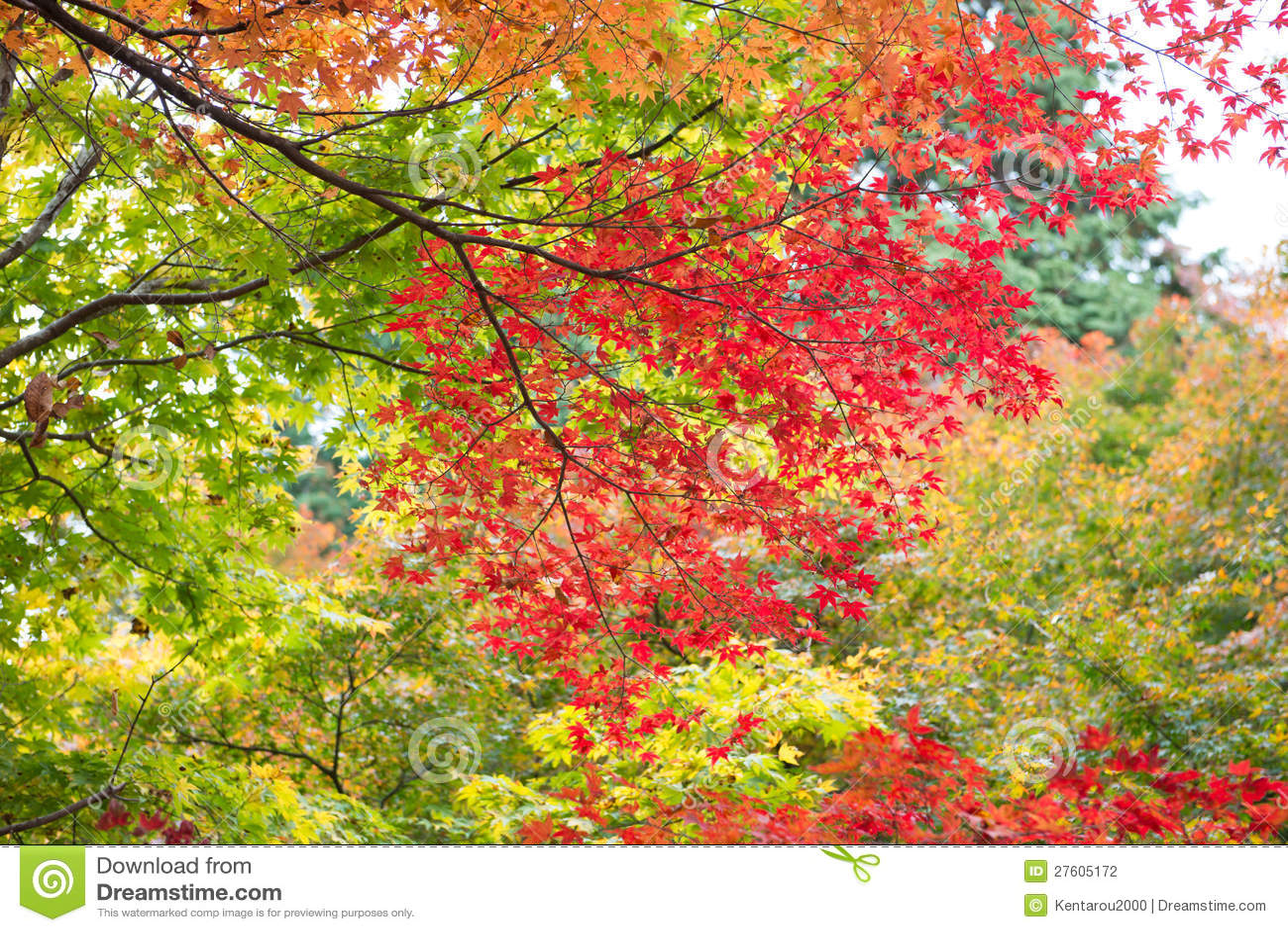 Mix färgade leaves