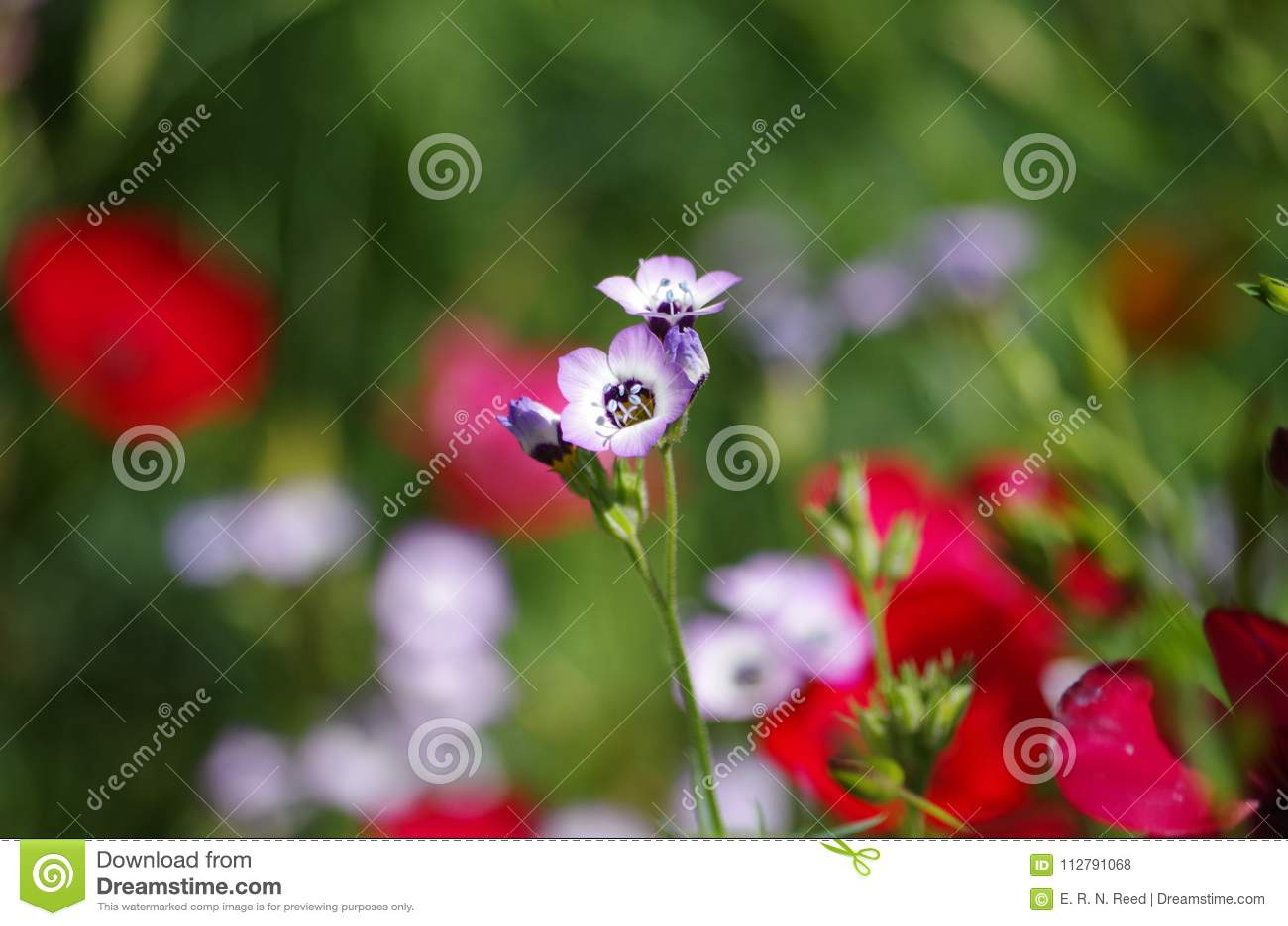 Spring Flowers At San Antonio Botanical Gardens Stock Photo Image