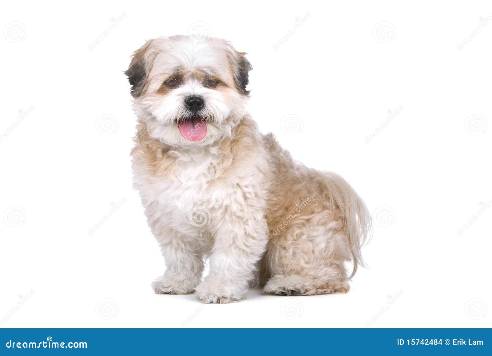 boomer the dog