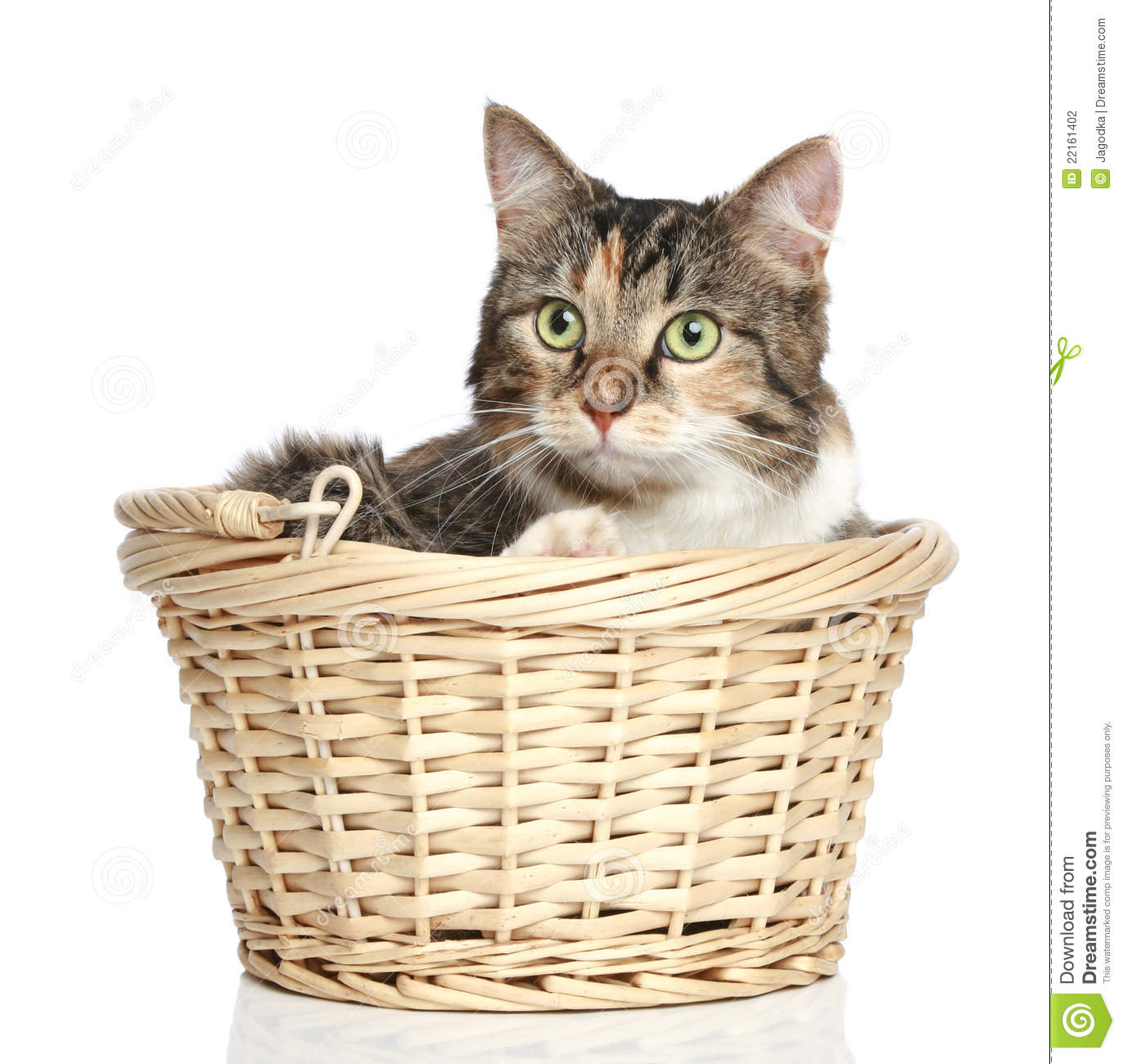 Mixed-breed cat in basket stock photo. Image of feline ...