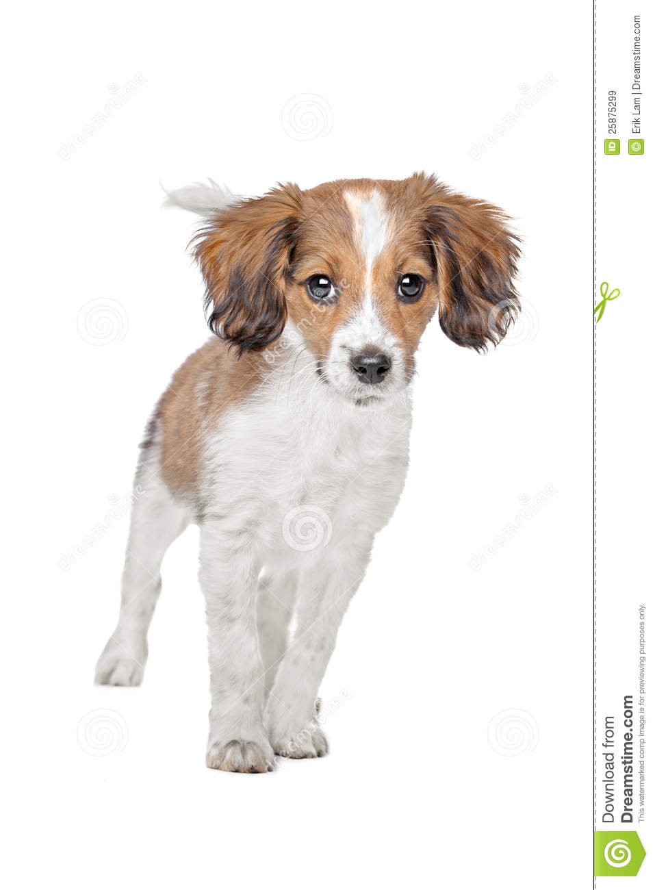 All Mixed Dog Breeds A Z
