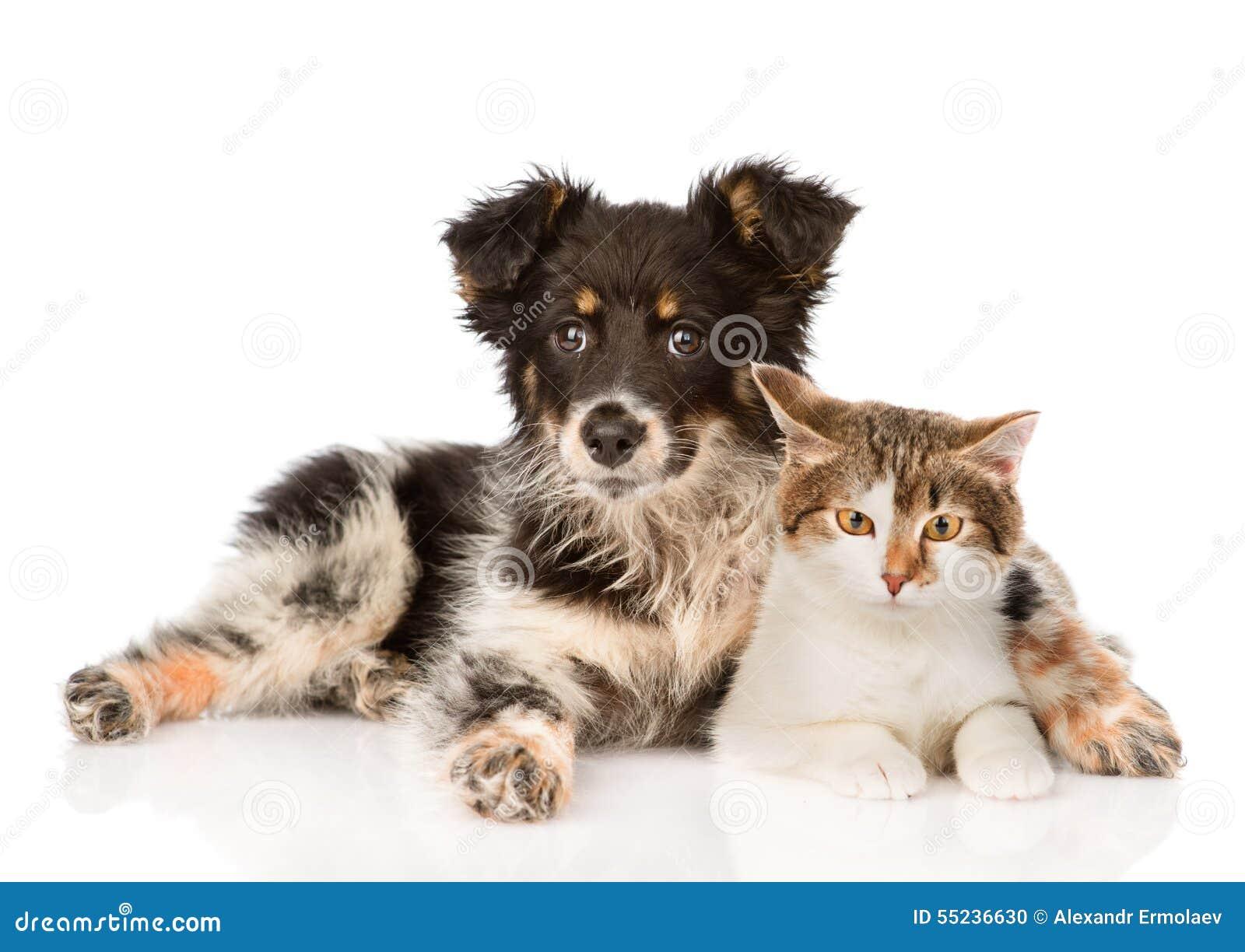 Hug Dog Breed Puppy