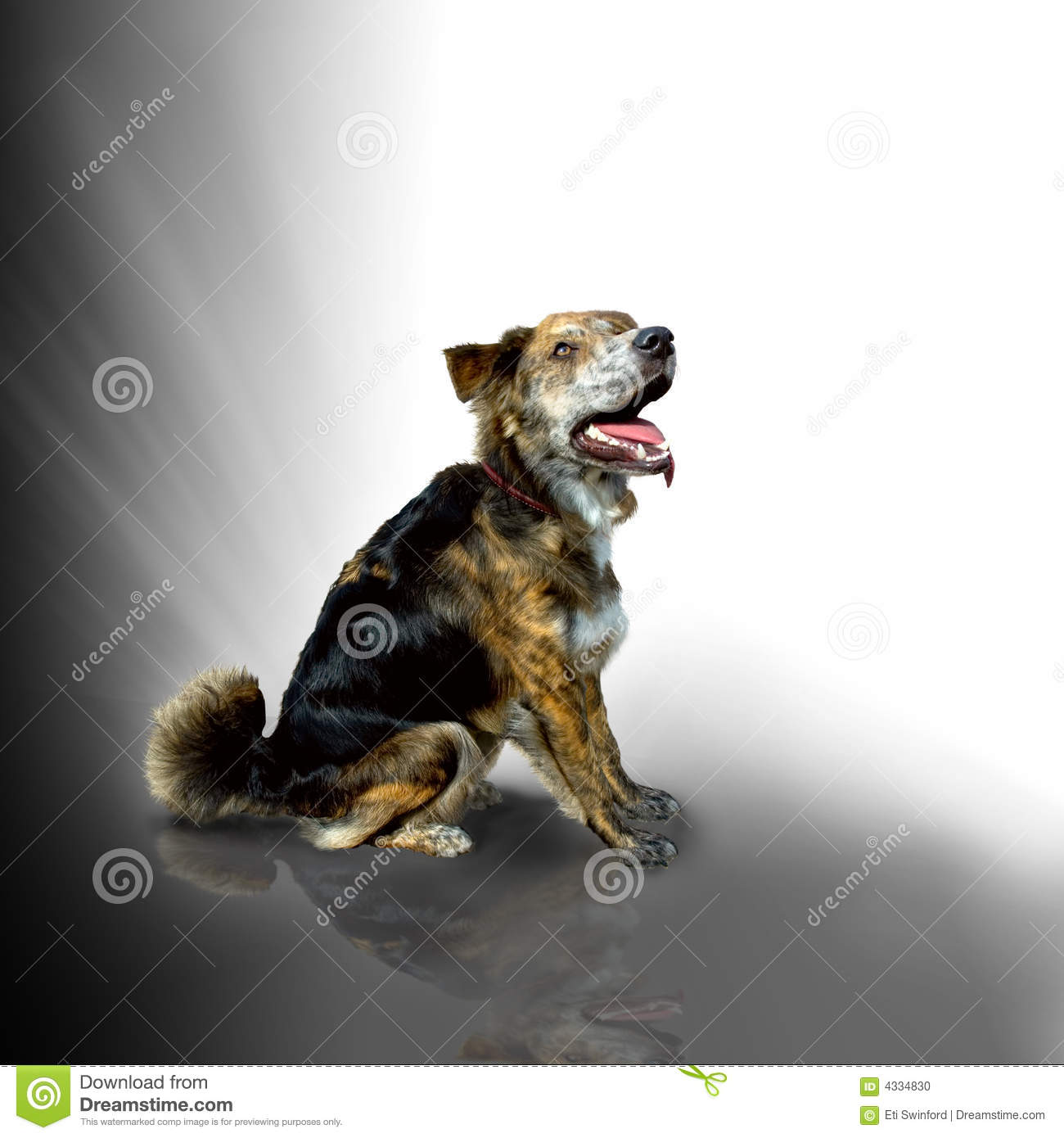 Download Mixed breed dog sitting stock photo. Image of canine, command - 4334830