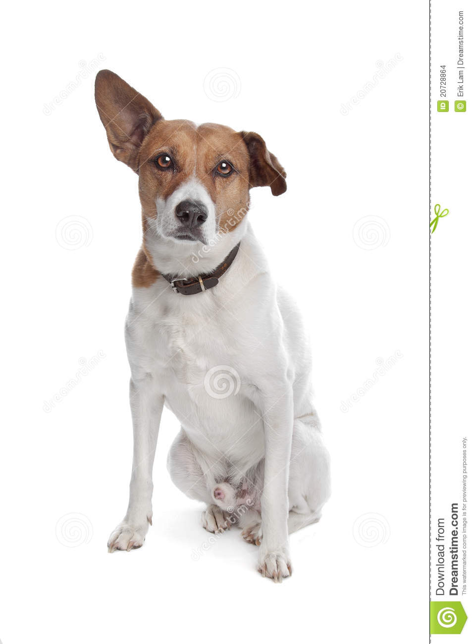 jack russell terrier mixed breeds - photo #3
