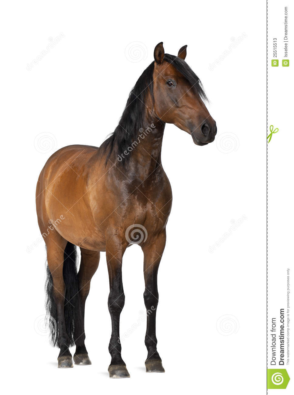 A List of Horse Movies of the 21st Century