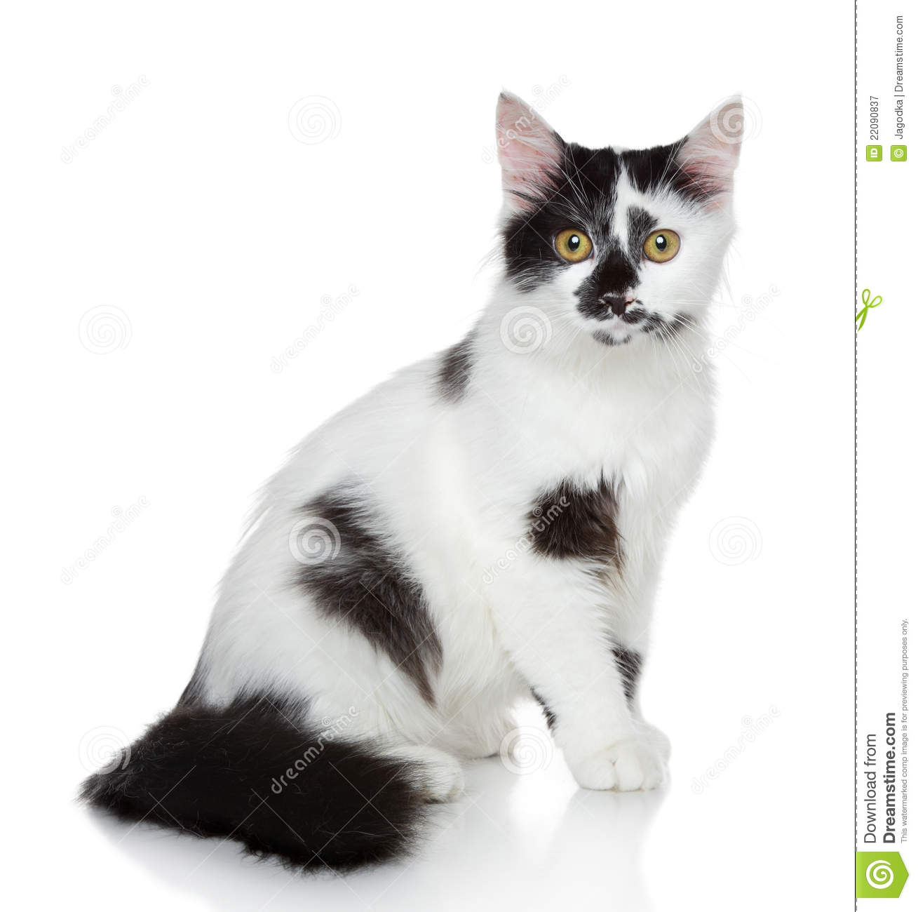 View topic - free warrior cat generator designs // closed to