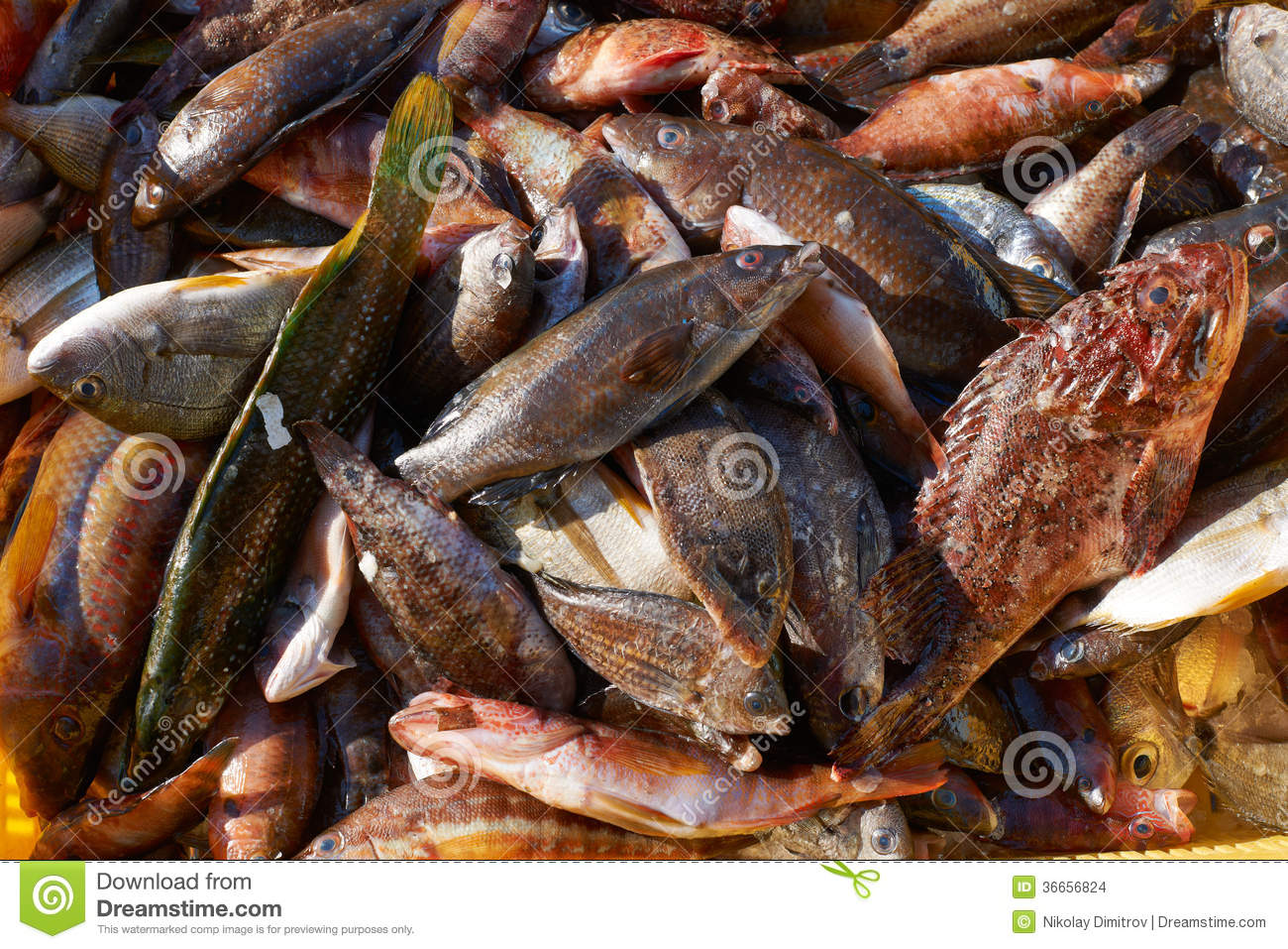 Mixed fish for sale on market stock images image 36656824 for Stock fish for sale