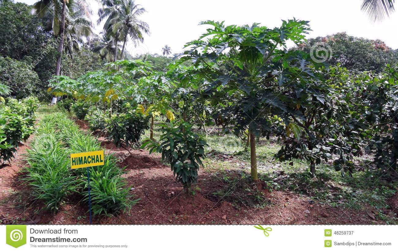 business plan on fruit plantation Business has yet developed a viable, sustainable model to competitively aggregate, process, package and sell tomato paste domestically our model links farmers directly to.