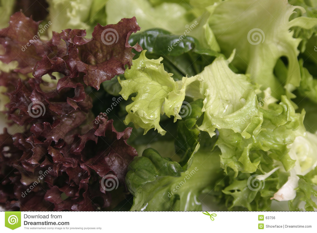 Mixed lettuce close up