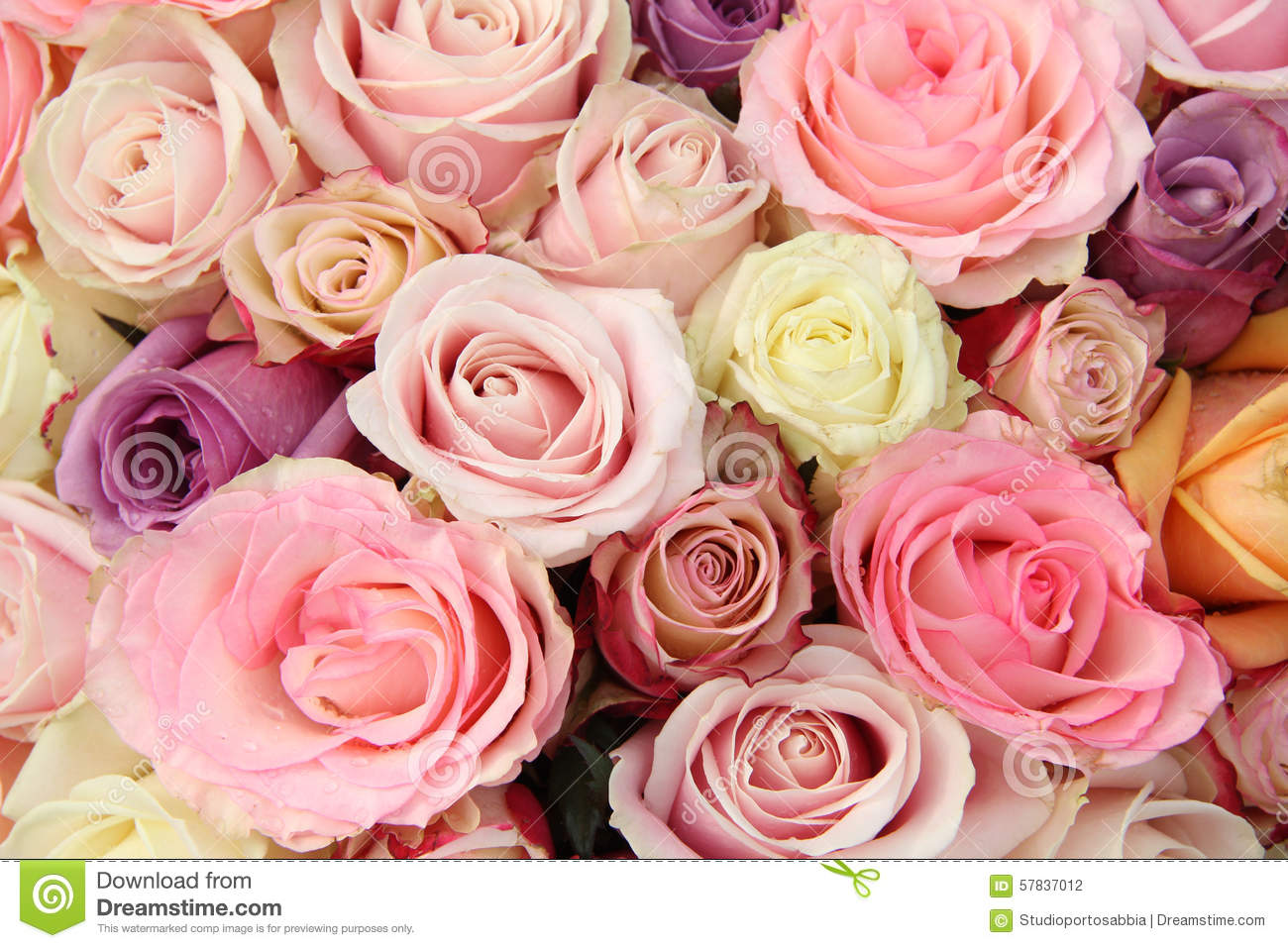 mixed pastel roses stock photo image of romance background 57837012. Black Bedroom Furniture Sets. Home Design Ideas