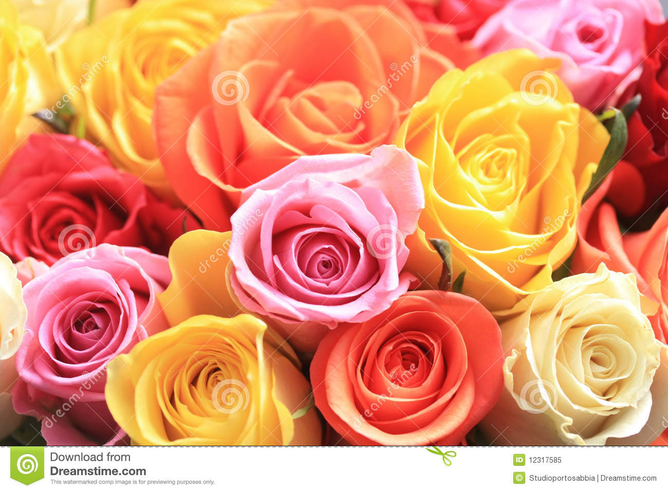 Mixed rose bouquet stock image. Image of paint, flora ...