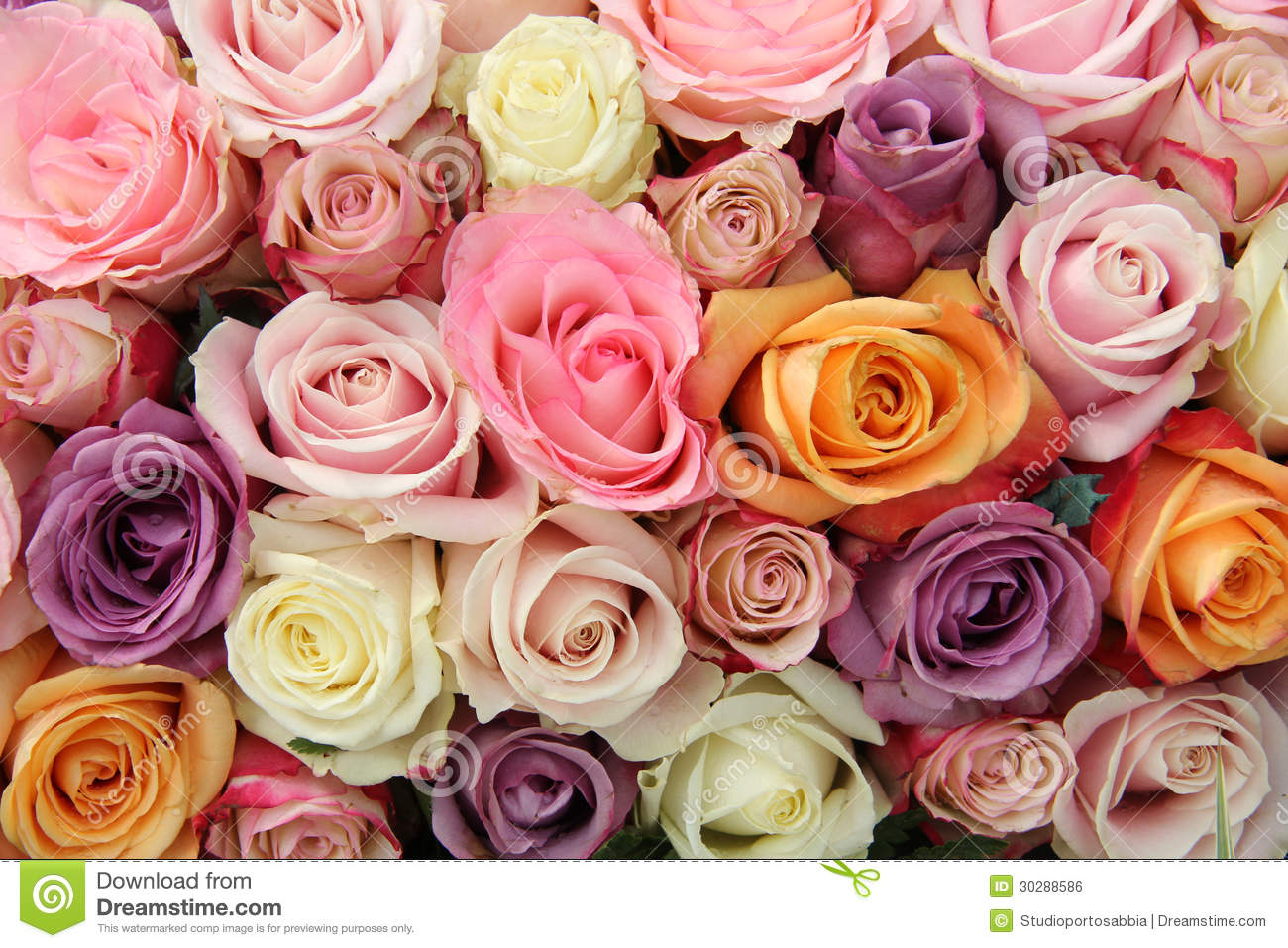mixed pastel roses stock photo image of marriage flower 30288586. Black Bedroom Furniture Sets. Home Design Ideas
