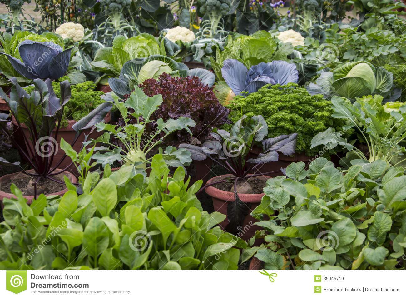 Mixed vegetable plants stock photo image 39045710 for Home garden plants