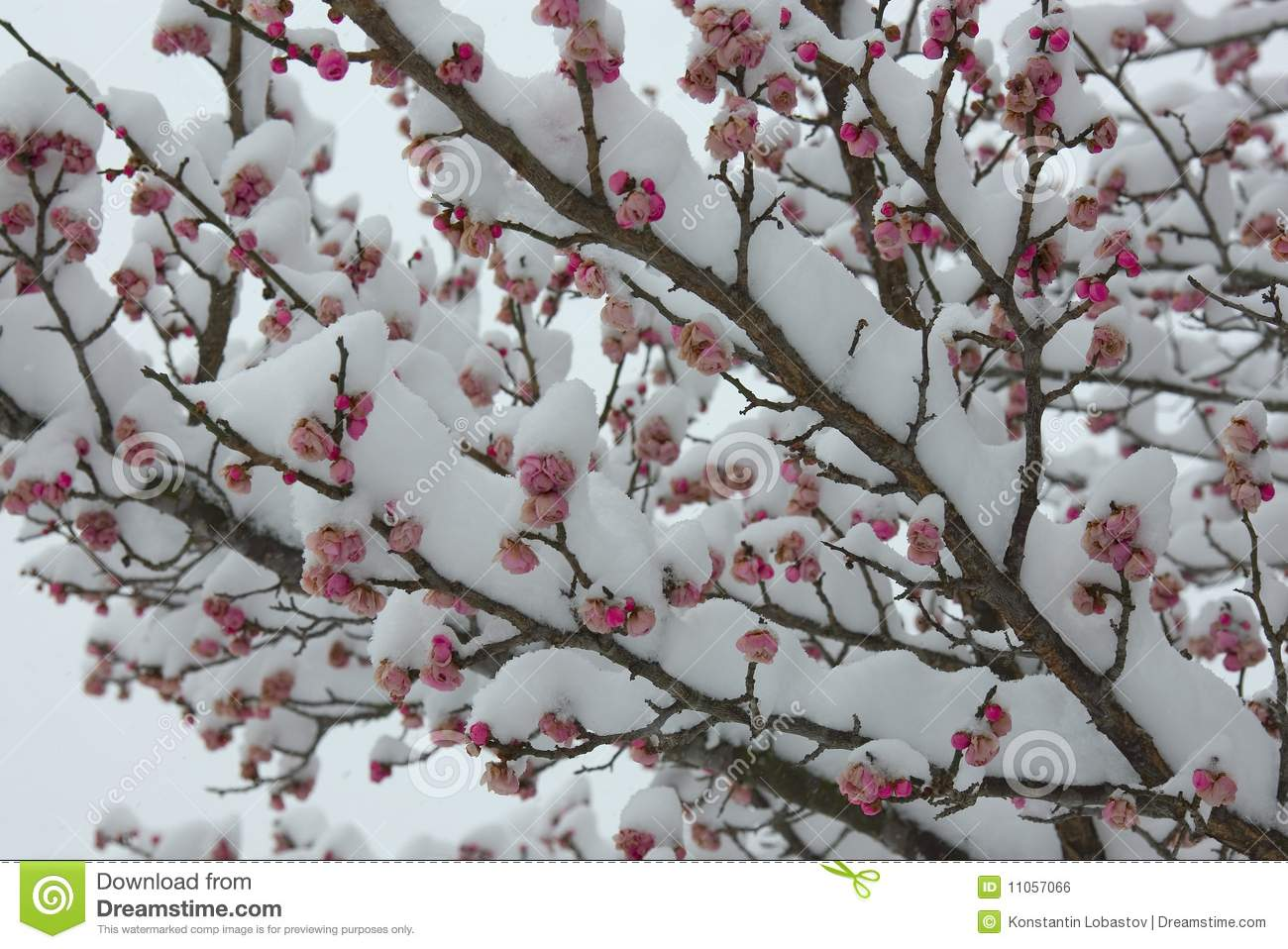 Mixing Of Spring And Winter Royalty Free Stock Image