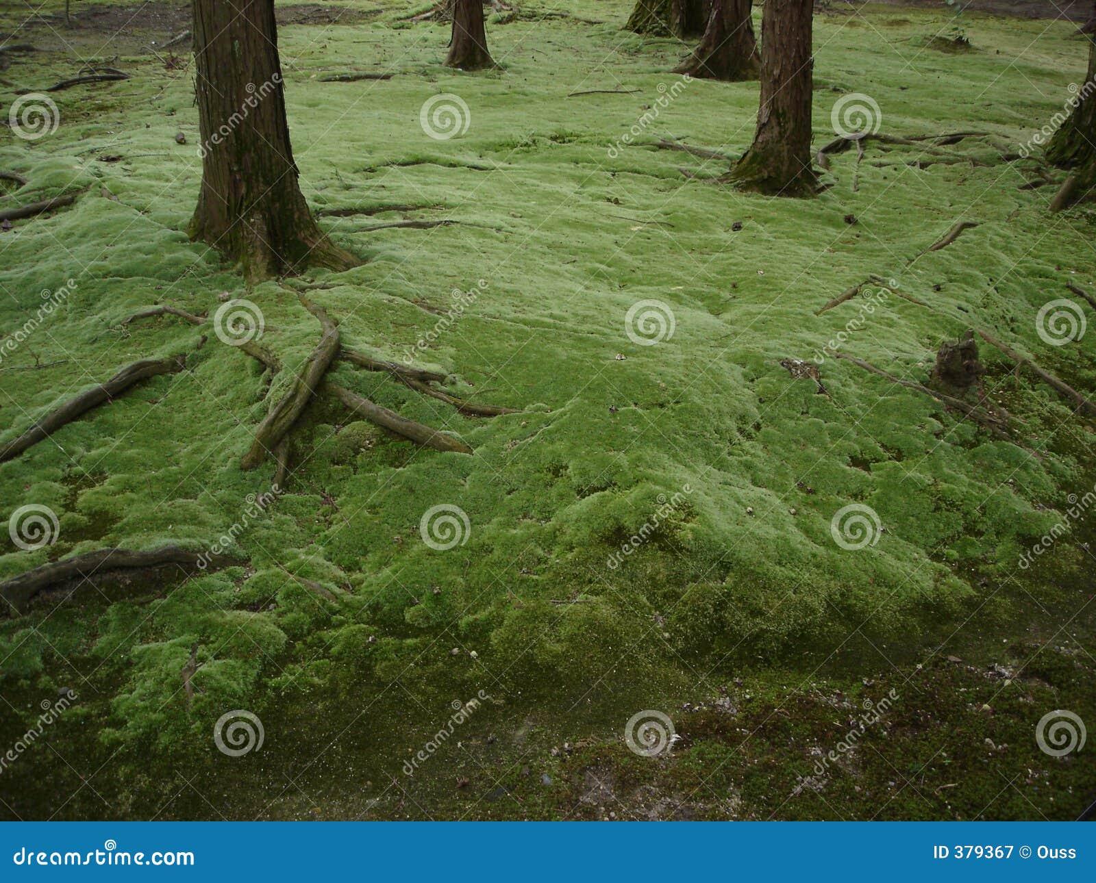 Miyazaki s forest 2