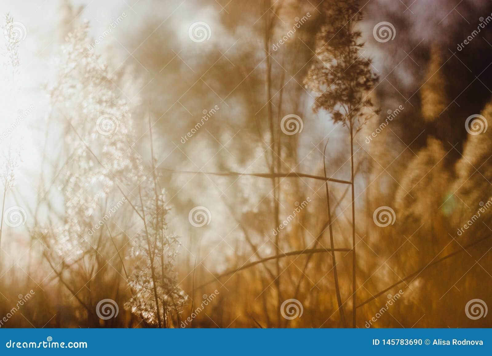Mjuk fokus av torra vasser för strand på guld- solnedgångljus