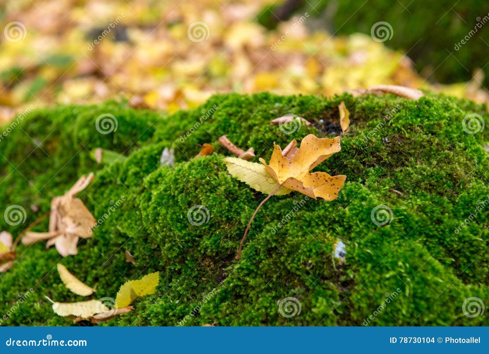 Mjuk grön vegetation i skogmossakolonierna