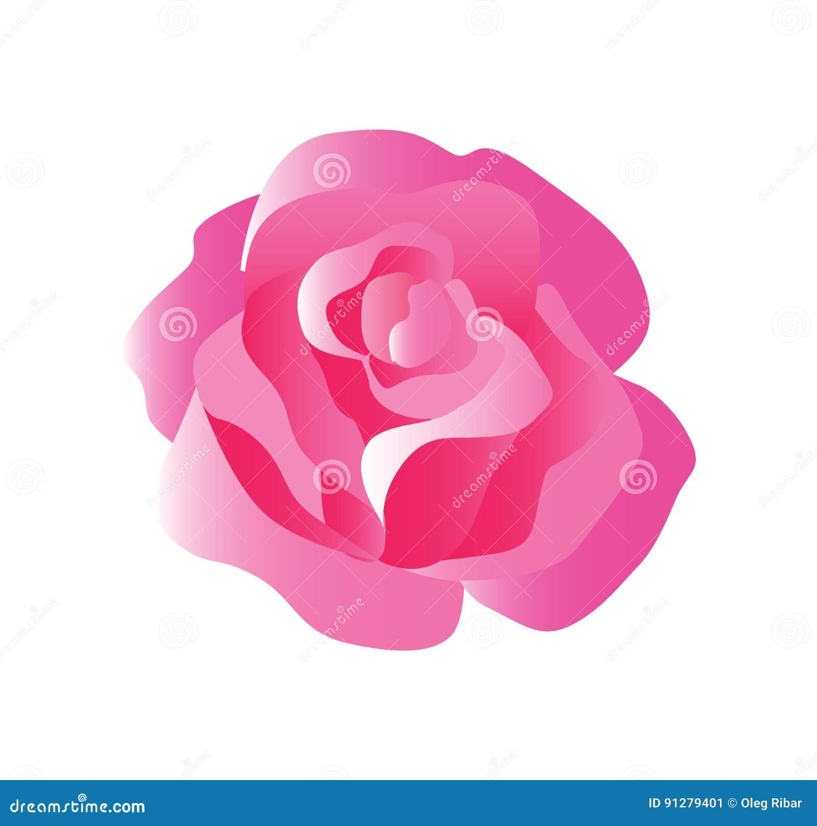 Mjuka Rose Blossom i allsidiga toner av rött, rosa färger och vit