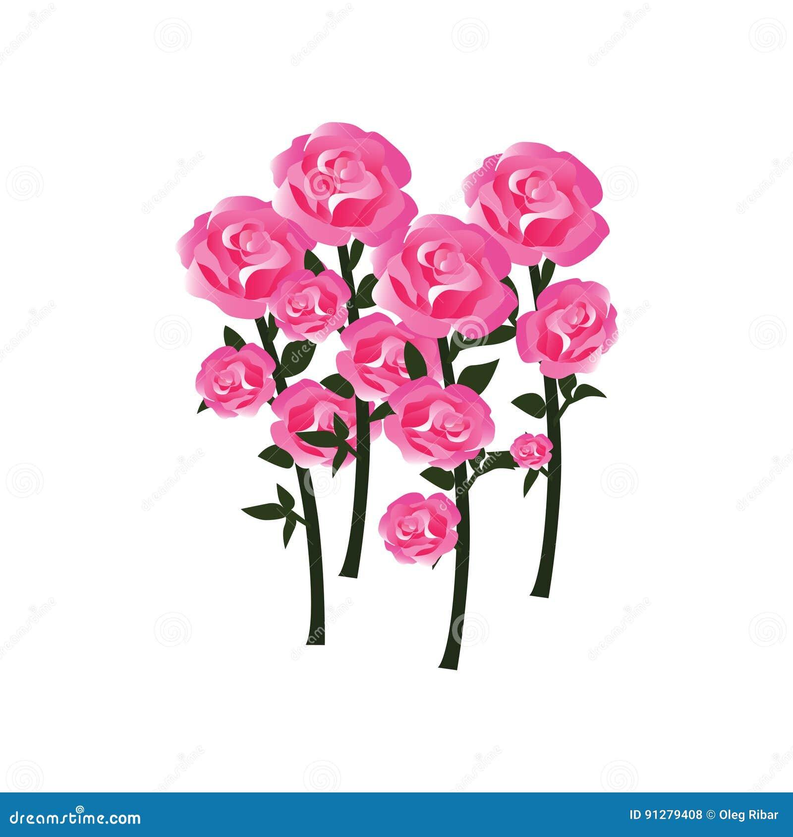 Mjuka Rose Blossoms med stammar som fullständigt framkallade blommor - i allsidiga toner av rött, rosa färger och vit