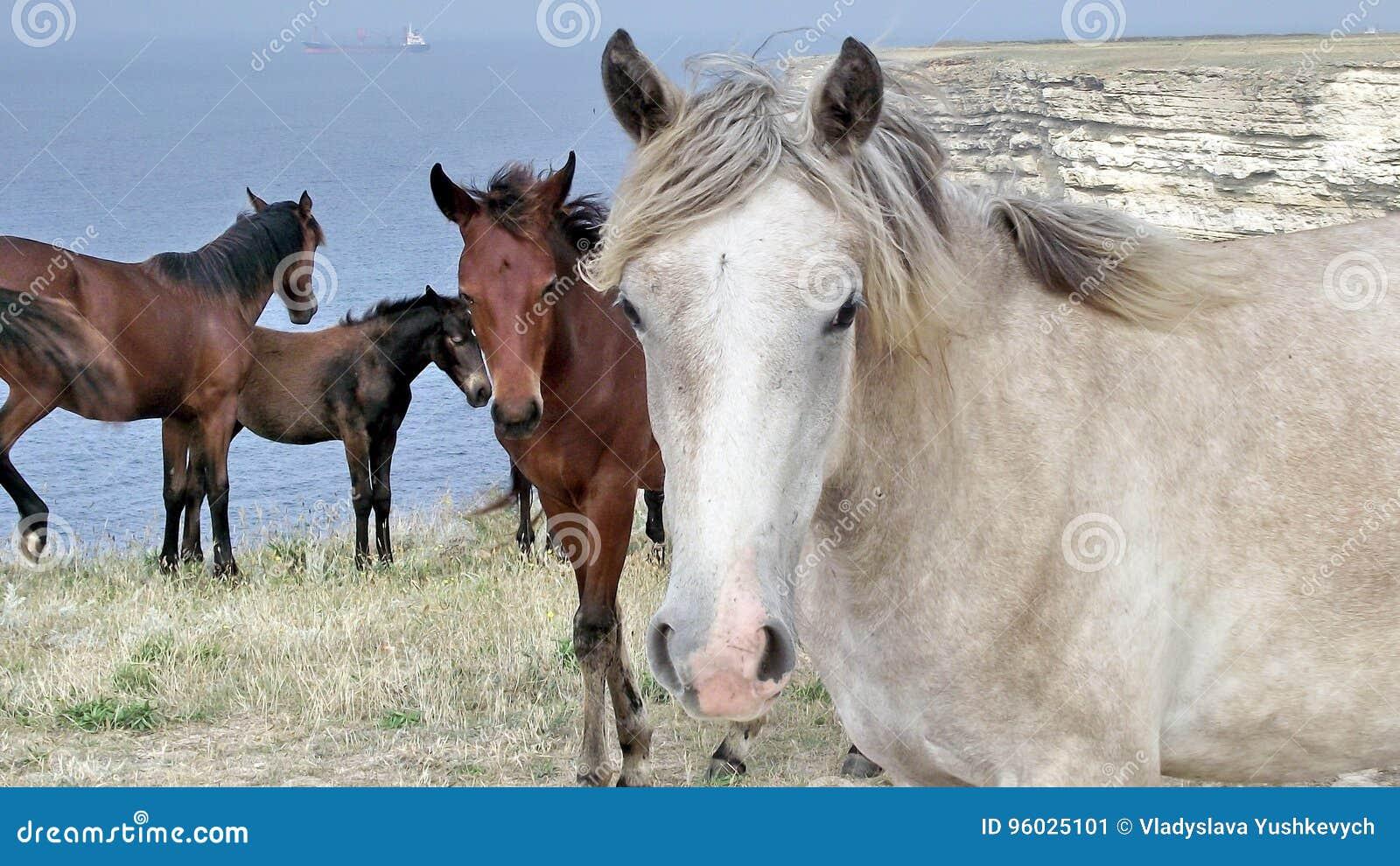 Mnóstwo dzicy konie przeciw tłu morze