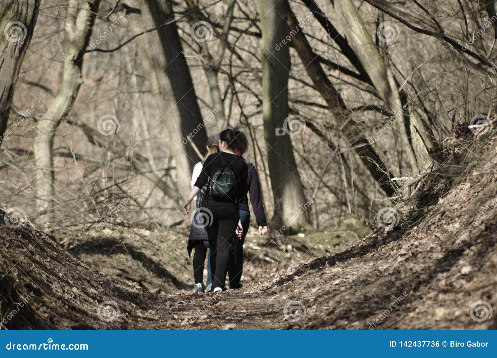 Moças que andam em uma floresta