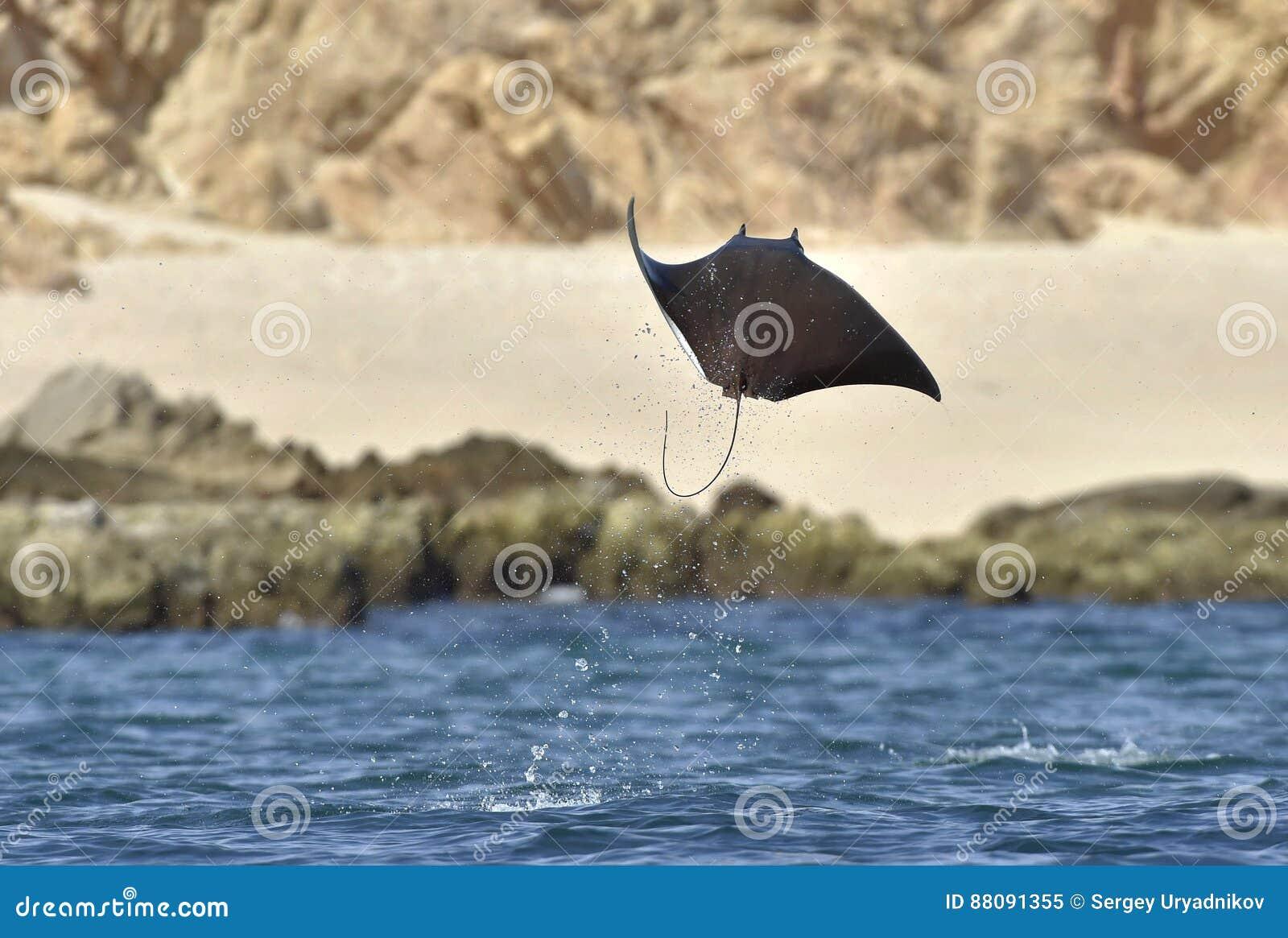 Mobula Ray do voo