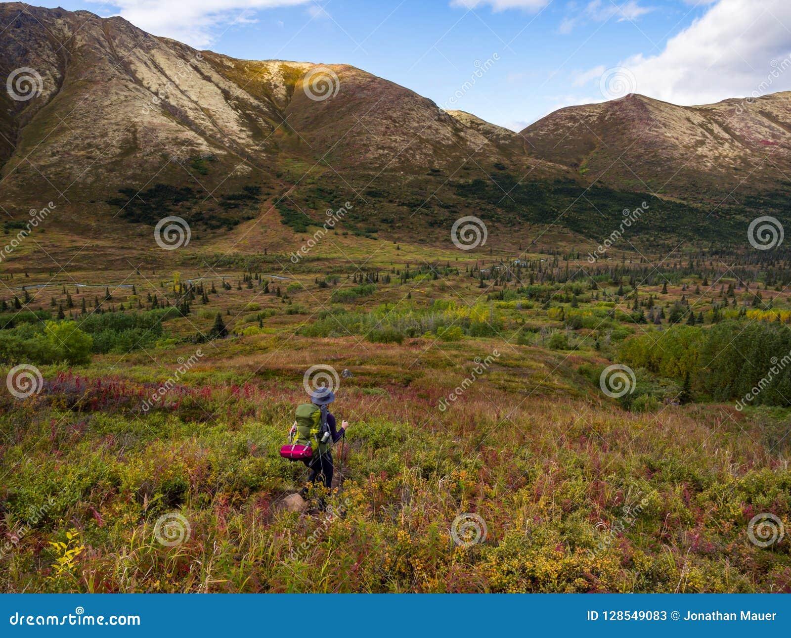 Mochileiro em Autumn Tundra de Alaska, vale da montanha