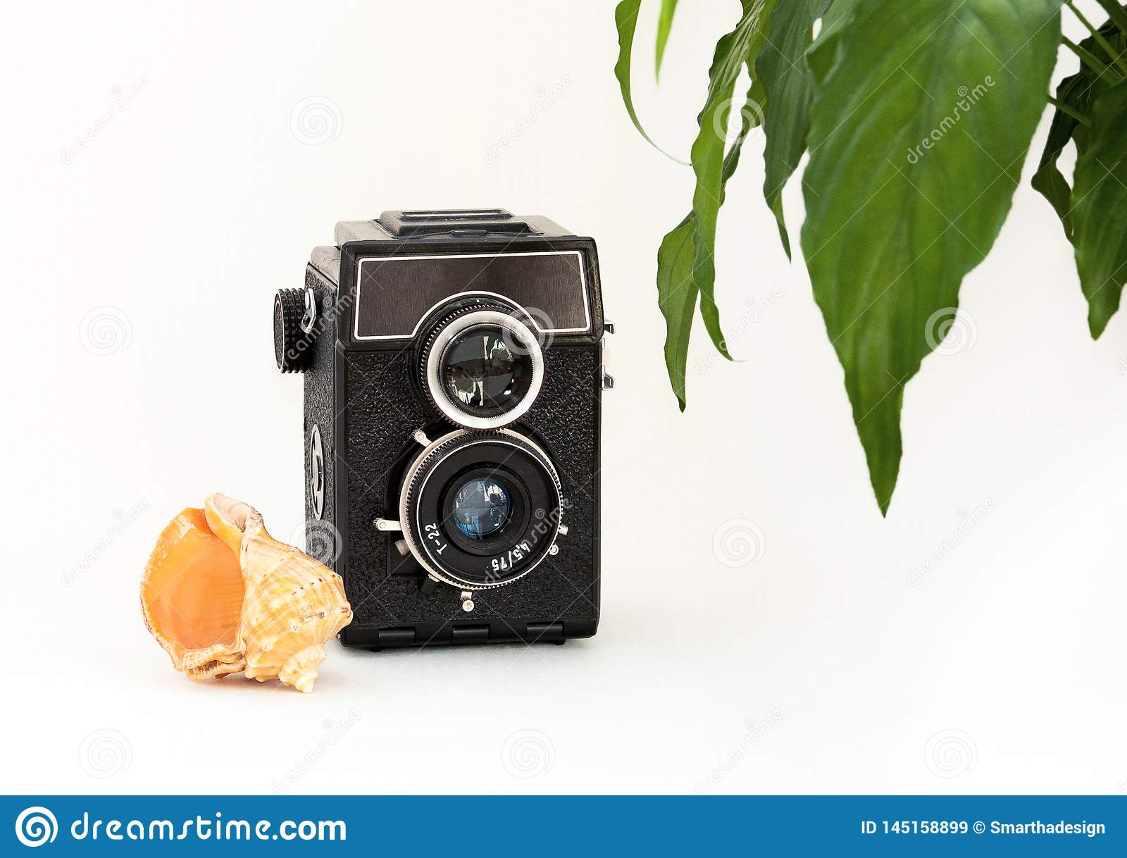 Mock up blank wall, old camera, plant and sea shell. Interior home white poster mockup with space for text and green leaves.