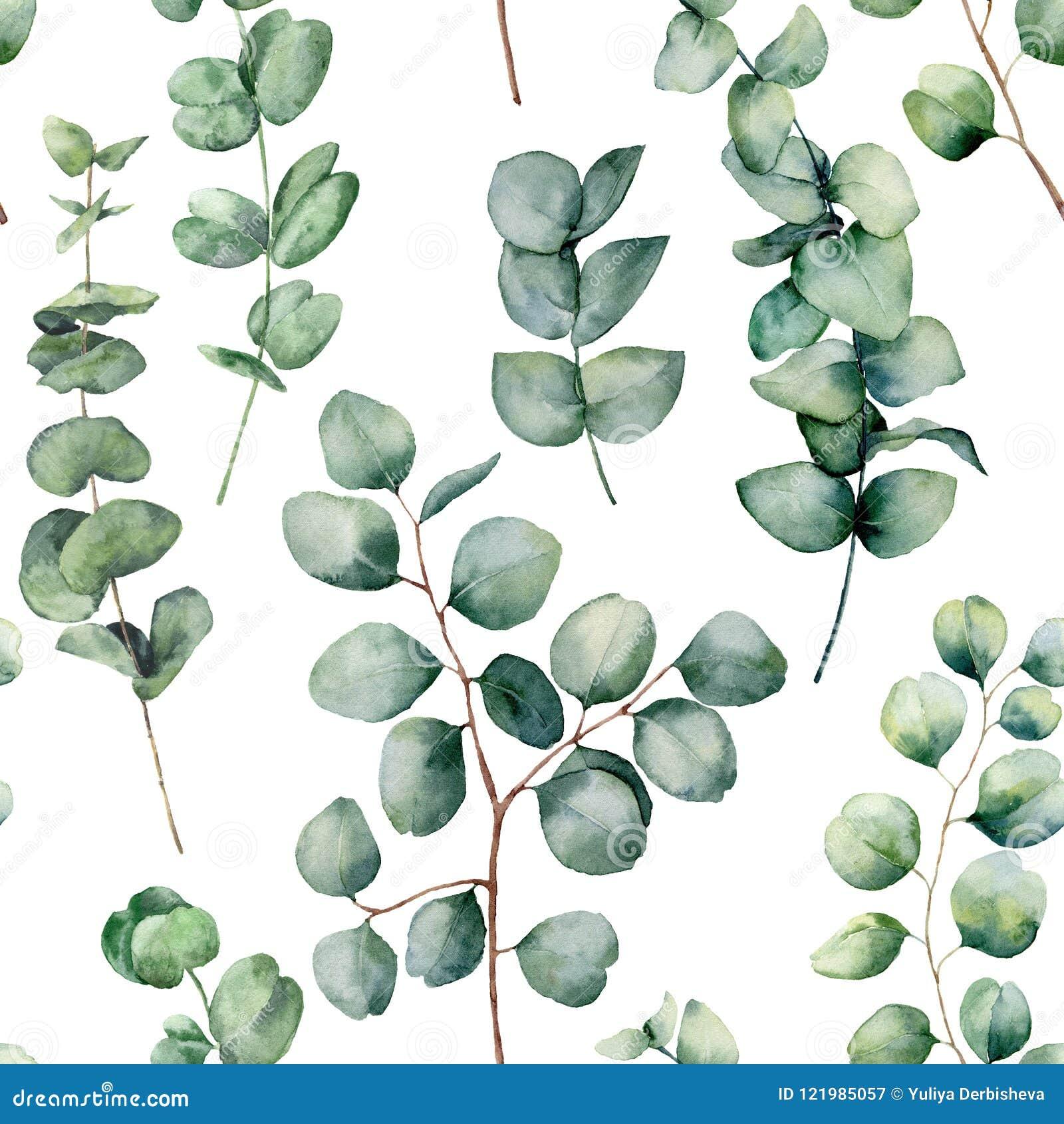 modèle d'aquarelle avec les feuilles rondes d'eucalyptus branche d