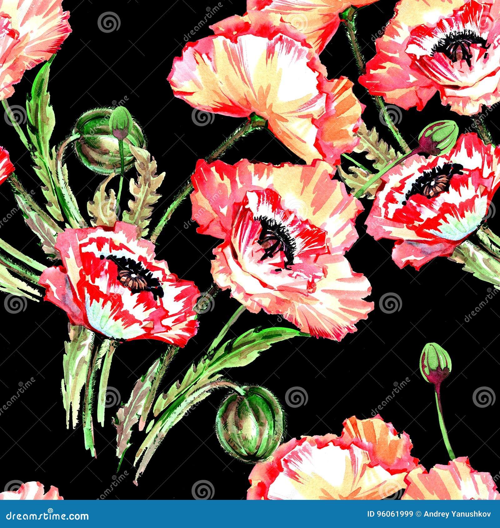Modèle de fleur de pavot de Wildflower dans un style d aquarelle