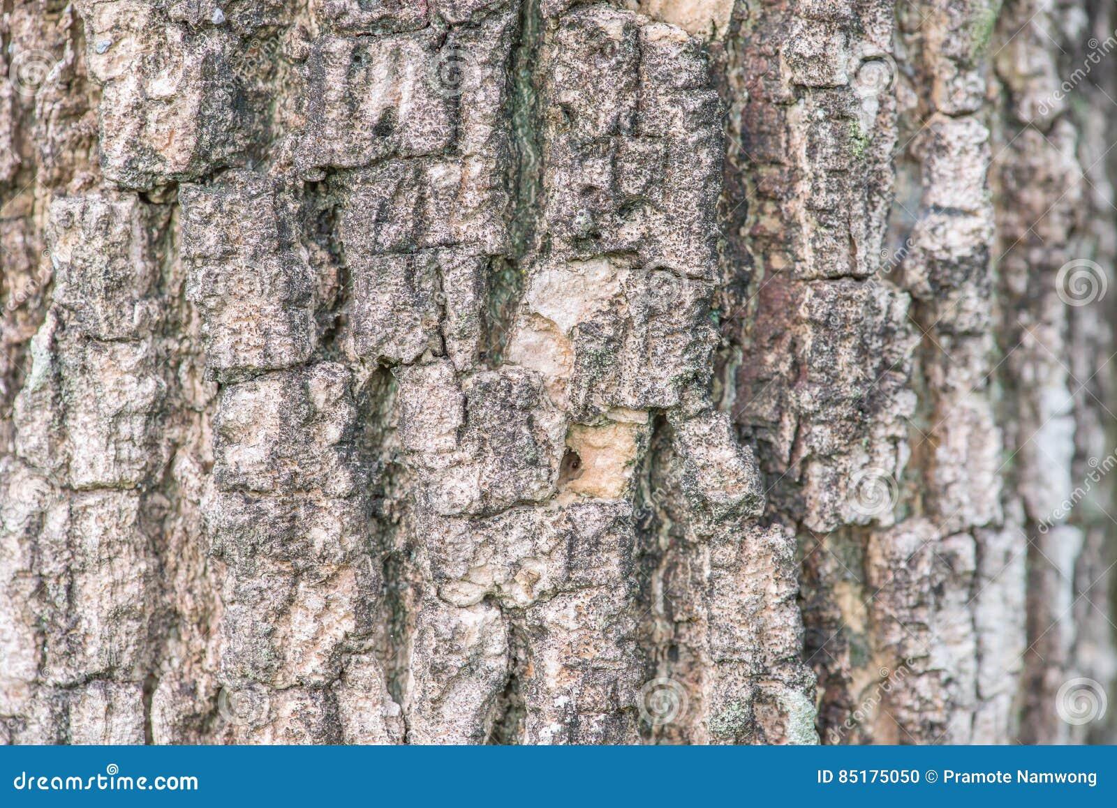 Modèle de fond de texture d écorce d arbre
