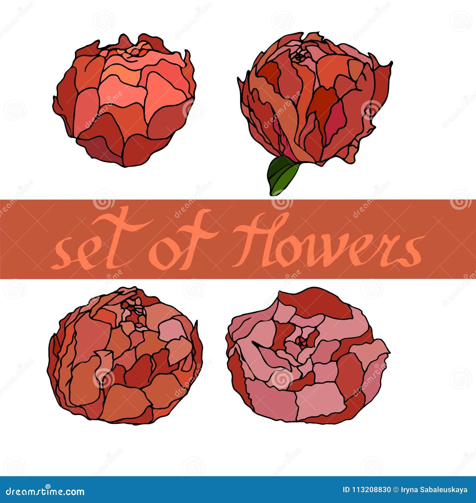 Modèle floral avec des peones avec des éléments de conception Illustration de vecteur