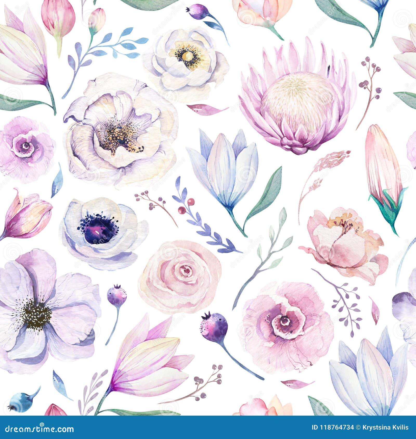 Modèle floral d aquarelle lilic sans couture de ressort sur un fond blanc Fleurs roses et roses, décoration de weddind