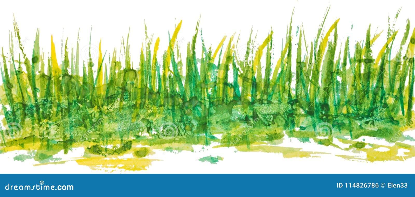 Modèle linéaire d herbe d aquarelle