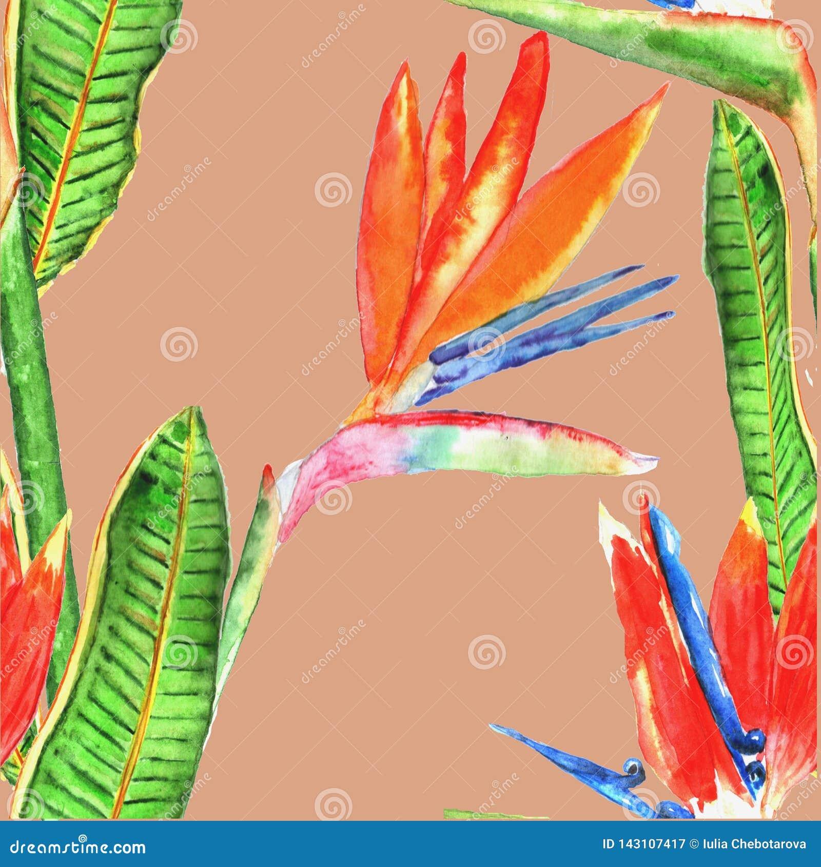 Modèle sans couture avec les fleurs tropicales watercolor Tiré par la main