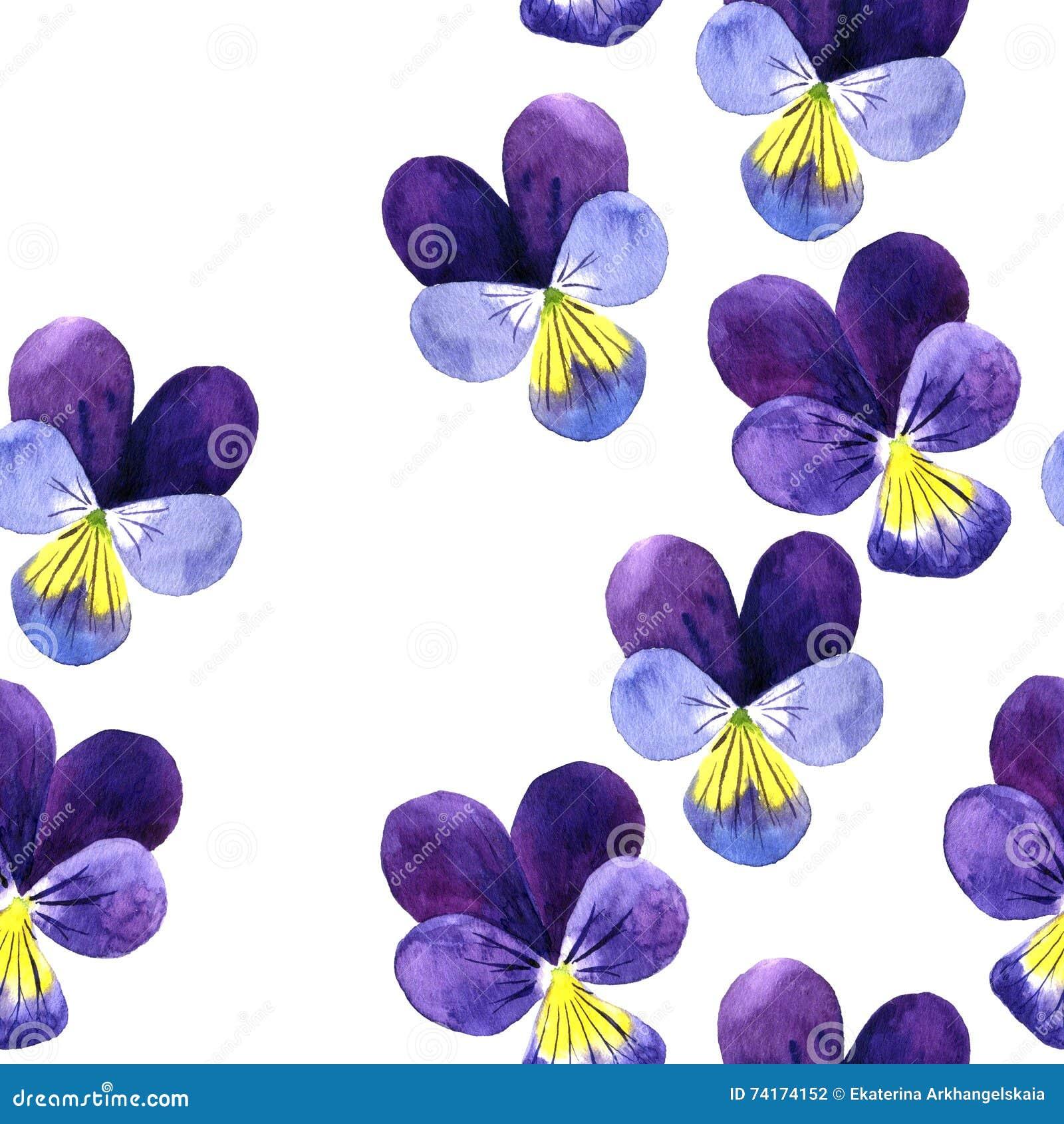 Modele Sans Couture Avec Les Fleurs Violettes De Dessin D Aquarelle