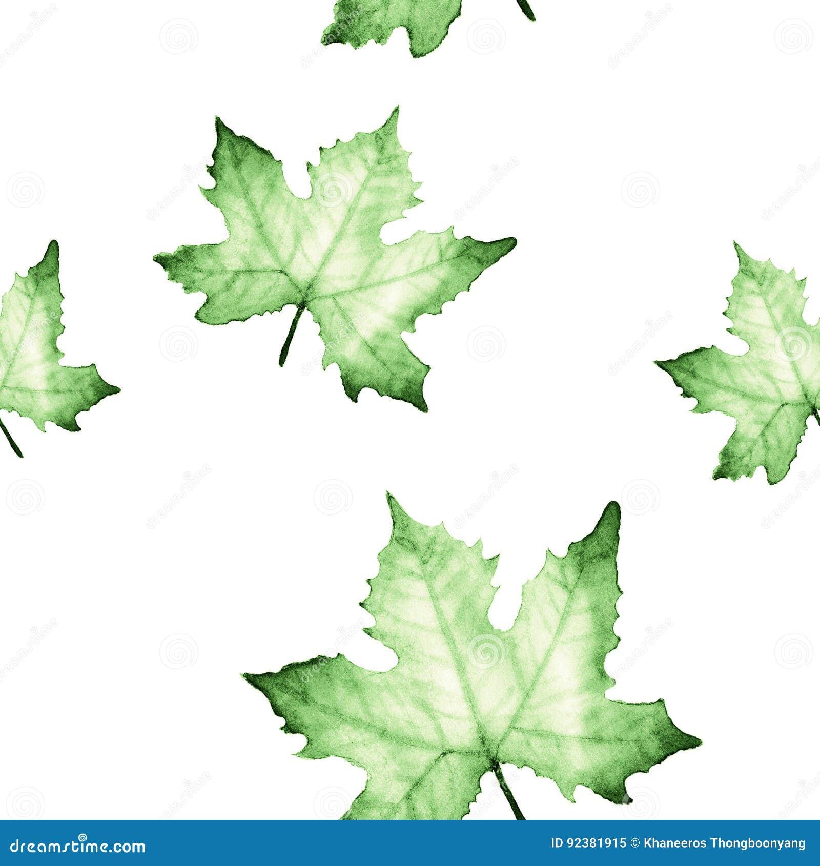 Modèle sans couture d aquarelle avec les feuilles vertes d érable