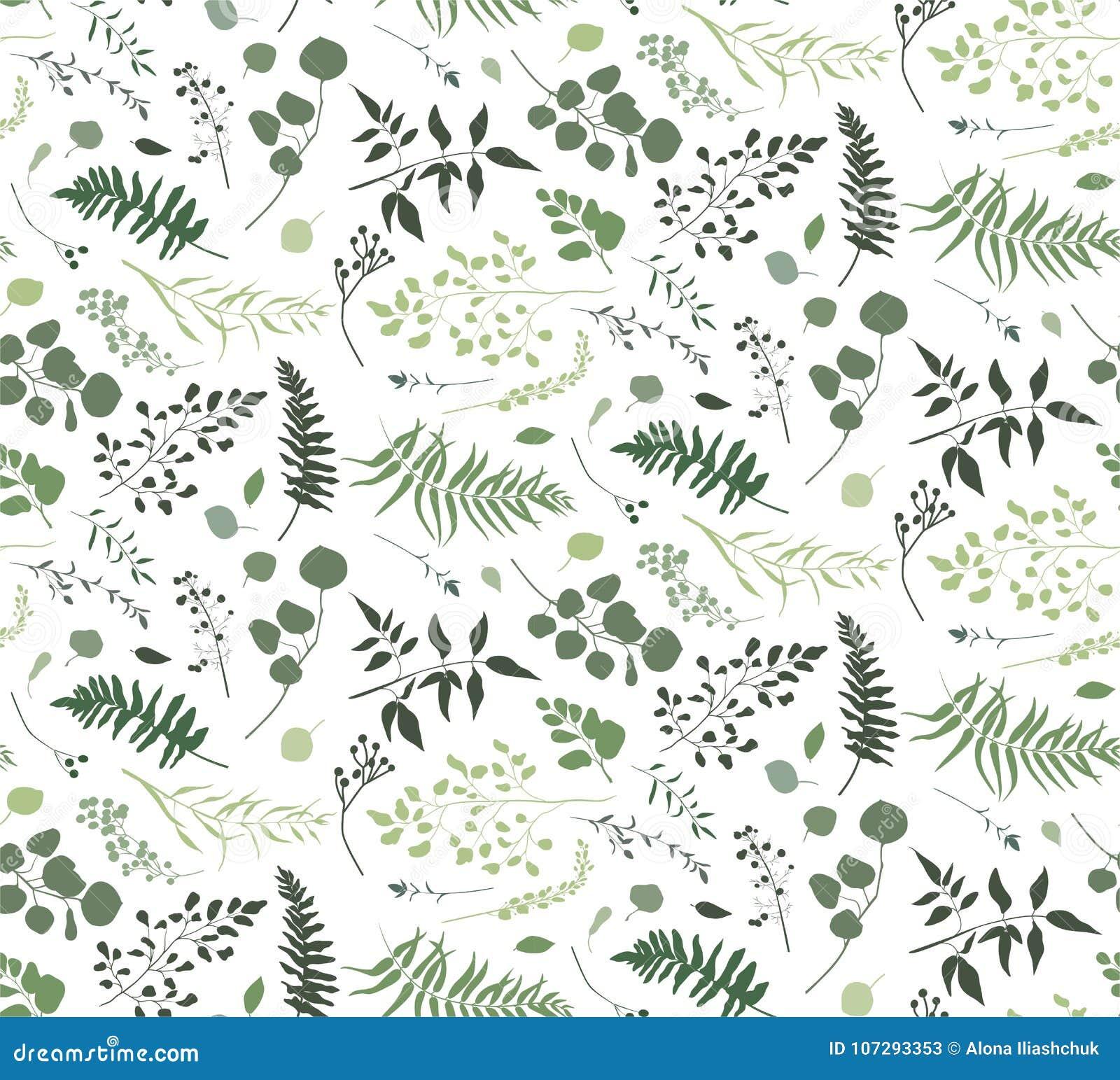 Modèle sans couture d arbre différent de fougère de paume d eucalyptus, feuillage