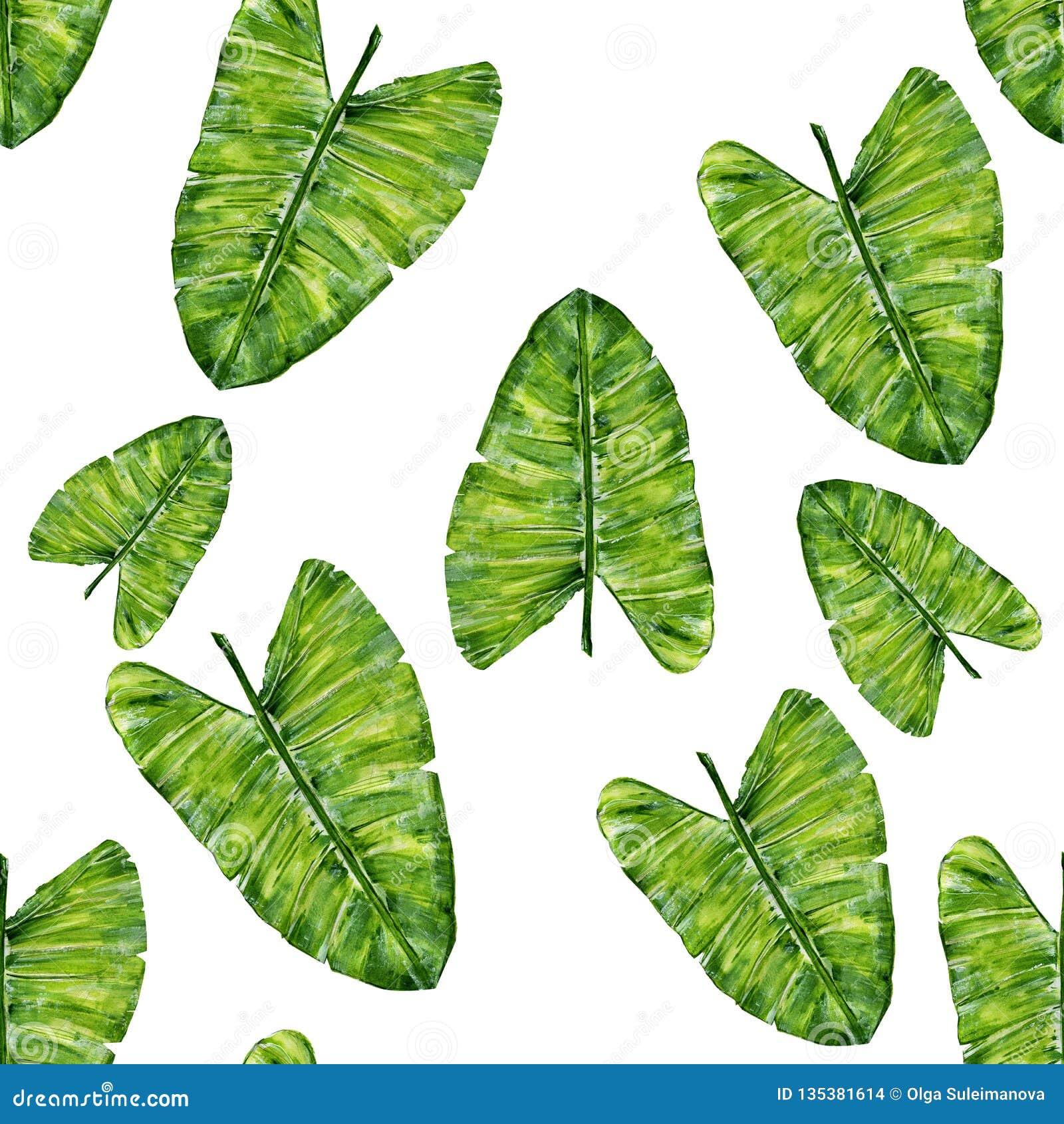 Modèle sans couture de feuilles tropicales Illustration de main-dessin d aquarelle