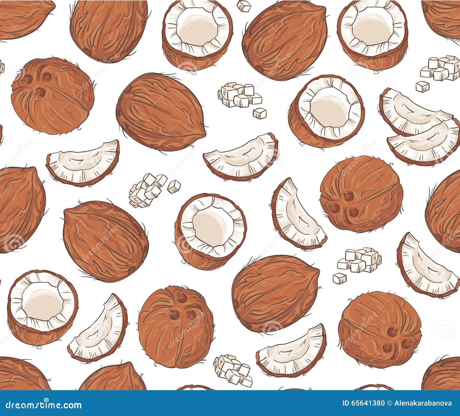 Modèle sans couture de vecteur avec des noix de coco