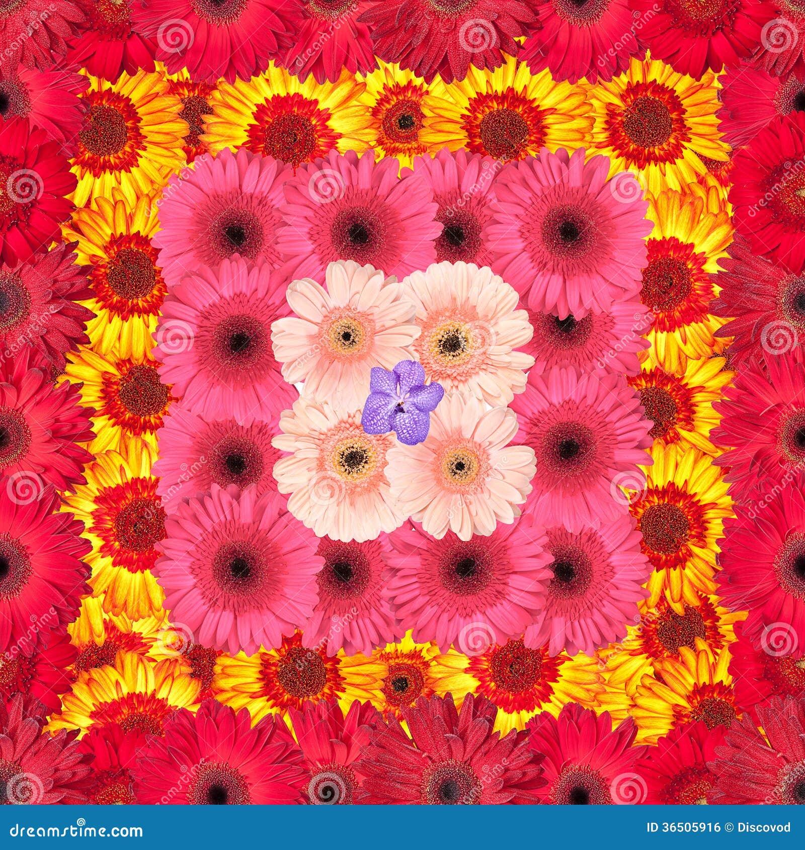 Modèle sans couture des fleurs vibrantes de Gerbera
