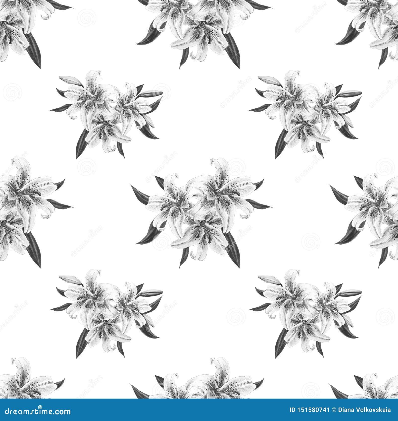 Modèle Sans Couture Floral De Beau Lis Noir Et Blanc Bouquet