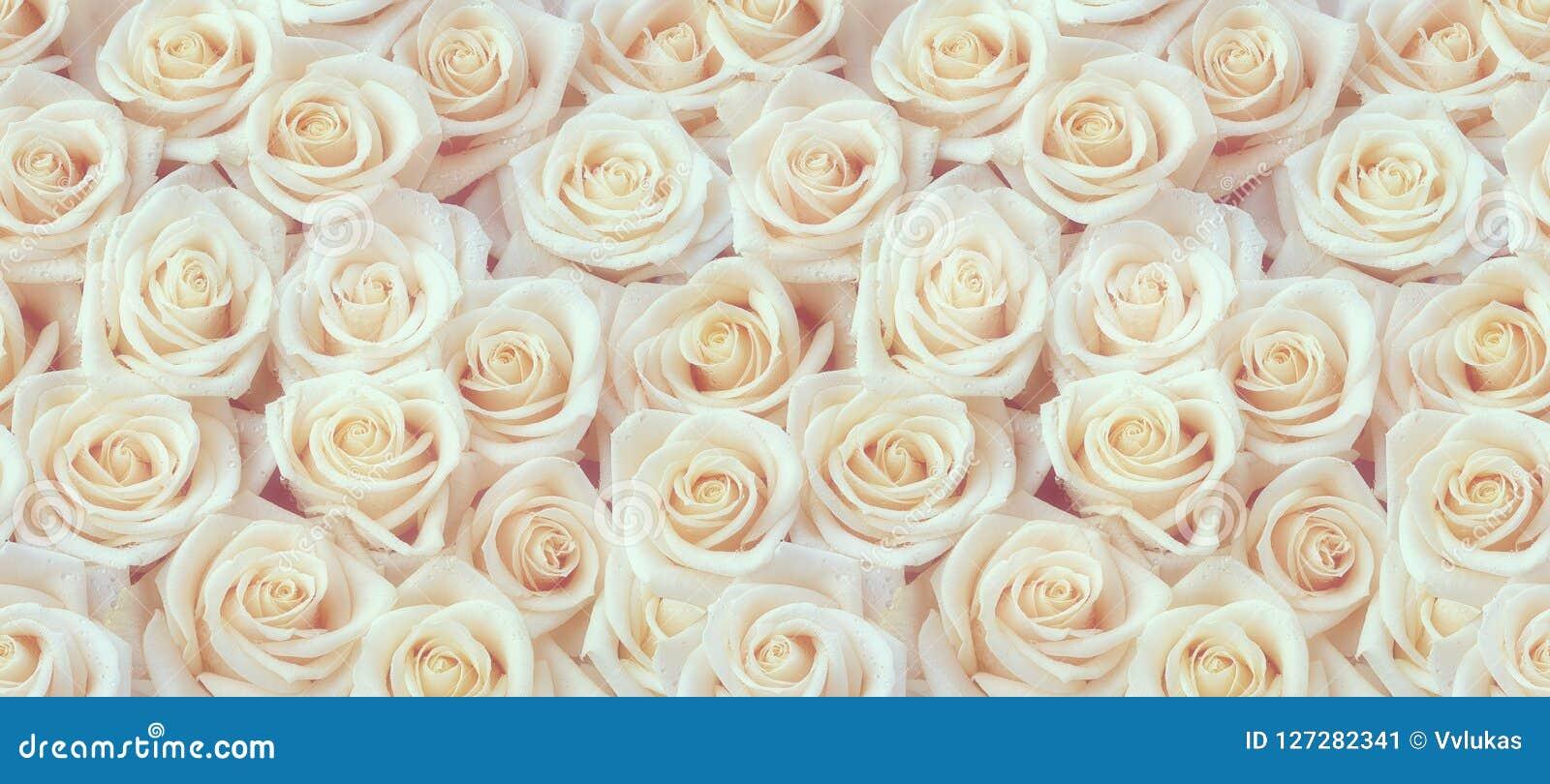 Modèle sans couture frais de roses blanches